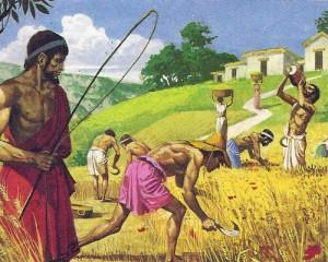 Работы на полях выполнялись рабами; за ними постоянно следили надсмотрщики, часто суровые, а порой и просто жестокие.