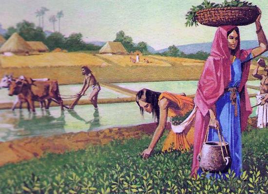 Индийский урожай