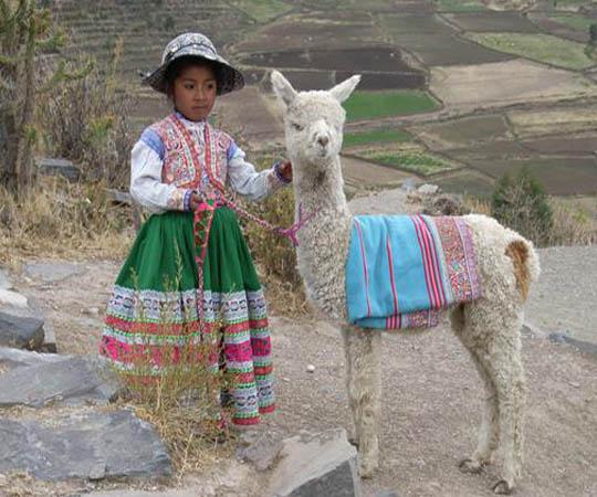 девочка с альпаком